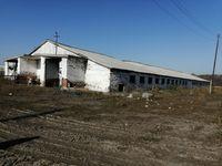 Корівник, телятник (ферма),с.Тепле,Гадяцький р-н.,Полтавська область