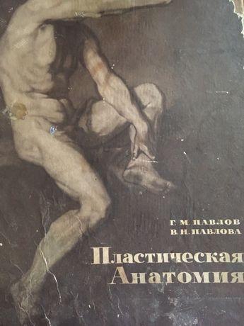 Павлов, Павлова Пластическая анатомия