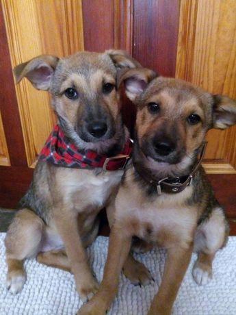 Подарим щенулек с прививками и паспортами. Собака, щенок, цуценя.