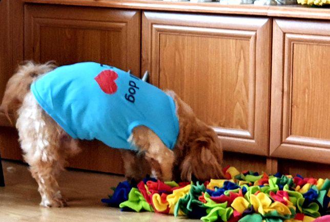 Ubranie dla psa bluzka