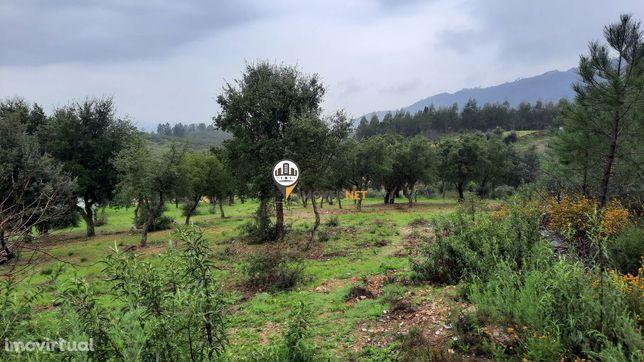 Terreno Rústico para venda, Tavila, Castelo Branco