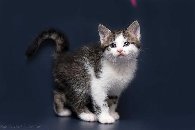 Отдам в хорошие руки котенка мальчика Воллиса.