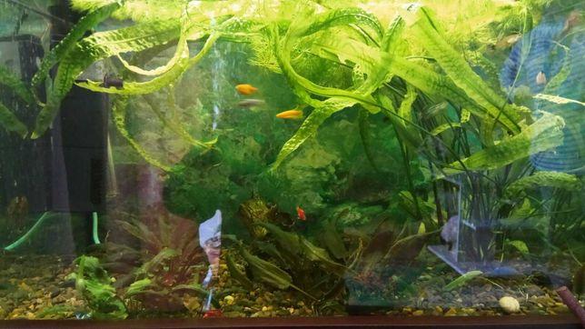 аквариум в комплекте