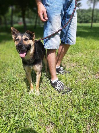 Piękny pies-Matis czeka na swój wymarzony dom! Nie pozwól mu czekać...