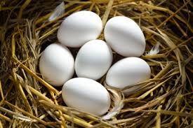 Ovos p. encubação de garnizas cocós coquichas (dúzia)