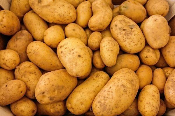 Ziemniaki paszowe 15gr