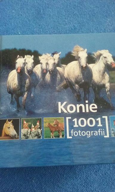 Konie 1001 fotografii