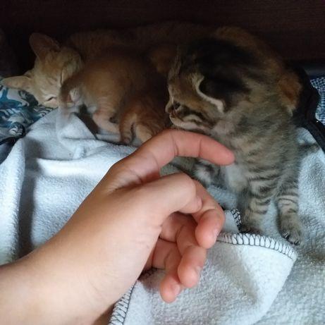 Отдаю котят в добрые руки!!!