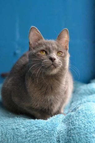 ніжна малесенька сіренька кішечка 7м