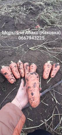 Морковь крупная ( морковча)
