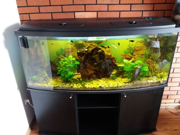 Akwarium panoramiczne 426 l, szafka, 2 filtry zewnętrzne, życie