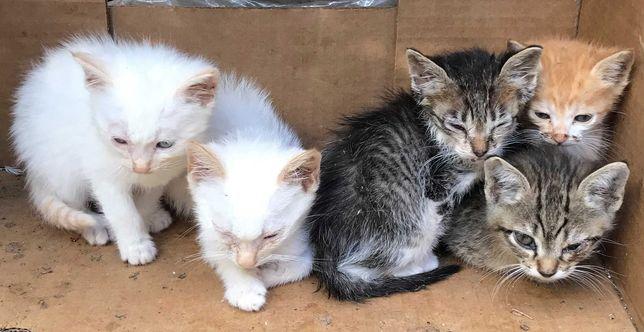 Gatos para adoção responsável