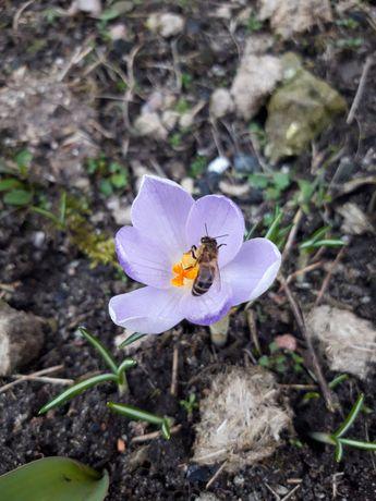 Usuwanie roi pszczlich