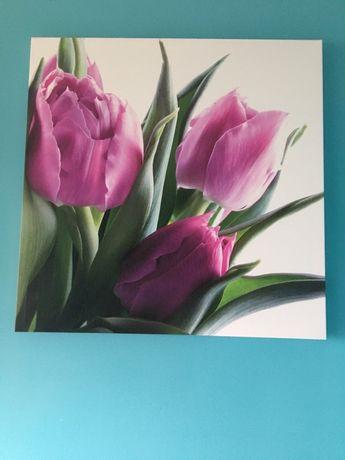 Fotoobraz tulipany