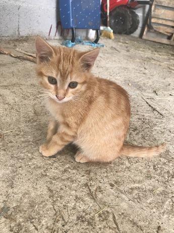 Dou 2 gatinhos- Ponte de Lima