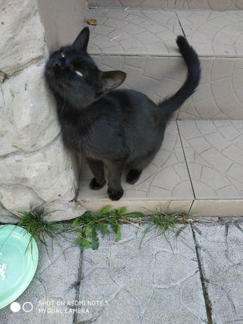 Кошка ищёт семью!