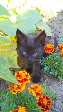 Чорні кошенята - хлопчик та дівчинка