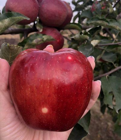 Продам саджанці плодових та кущових дерев оптом та вроздріб