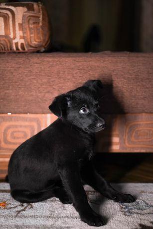 Щенок от небольшой собаки ищет дом!