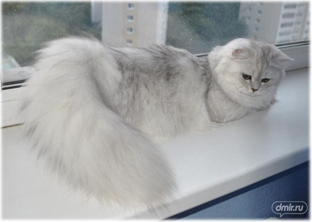 ВЯЗКА-красивый котик приглашает на свидание подружек-кошечек!