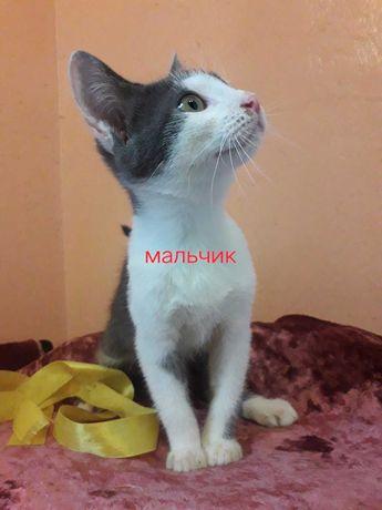 черно-белые котята мальчик и девочка