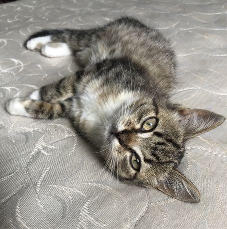 Котенок (девочка) 2 месяца в добрые руки