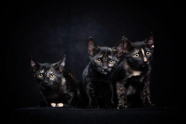 Gatinhas para adopção