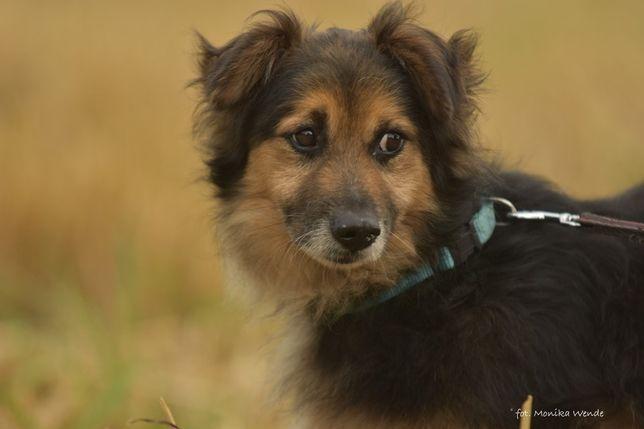 Stroszek - pies w poważnym wieku do adopcji