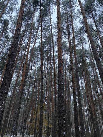 Участок в сосновом лесу в закрытом коттеджном городке. Киев 6км
