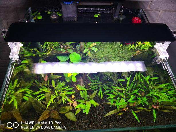 Akwarium z oświetleniem
