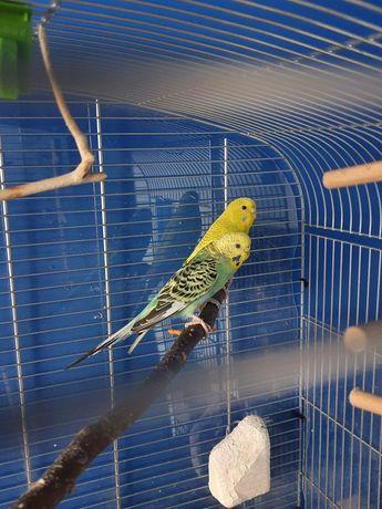 Klatka dla papug + gratis papuga