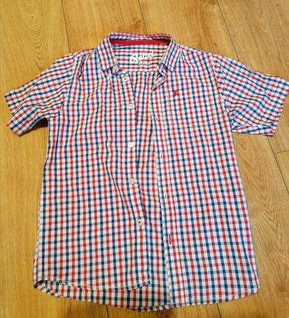 Koszula w drobna kratę.