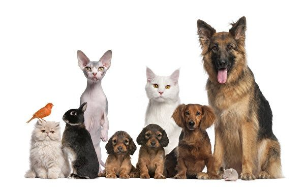 ВЕТЕРИНАР с выездом на дом..СТЕРИЛИЗАЦИЯ,КАСТРАЦИЯ кошек и собак.