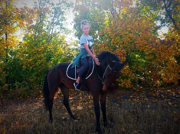 Прогулки на лошади. Занятия верховой ездой