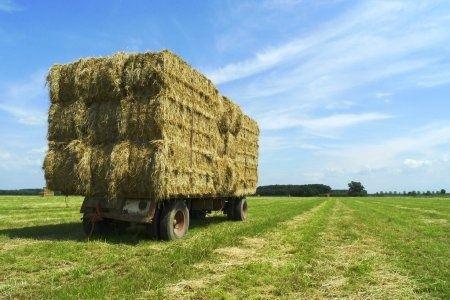 Люцерна, солома,сено, зерносмеси, кукуруза, гранулы люцерны, пшеница.