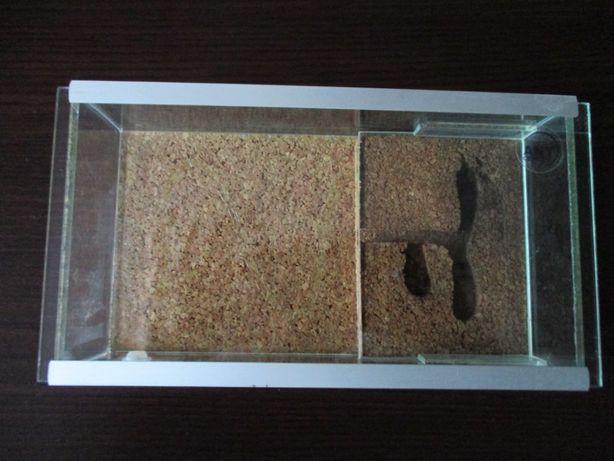 Formikarium dla mrówek