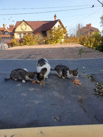 Доросла кішка і двоє кошенят шукають родину