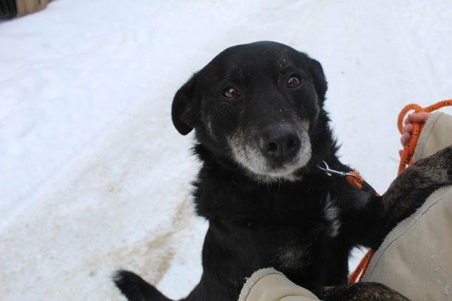 Russel - pies pełen miłości szuka domu