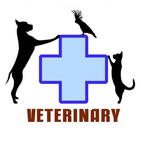 Ветеринар вызов на дом Мелитополь(возможно за пределы города)