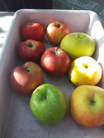 Саженцы яблонь зимние, летние, осенние
