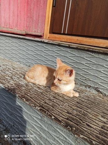 Котик віддам в добрі руки БЕЗКОШТОВНО