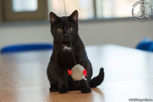 Salem czeka na magię!