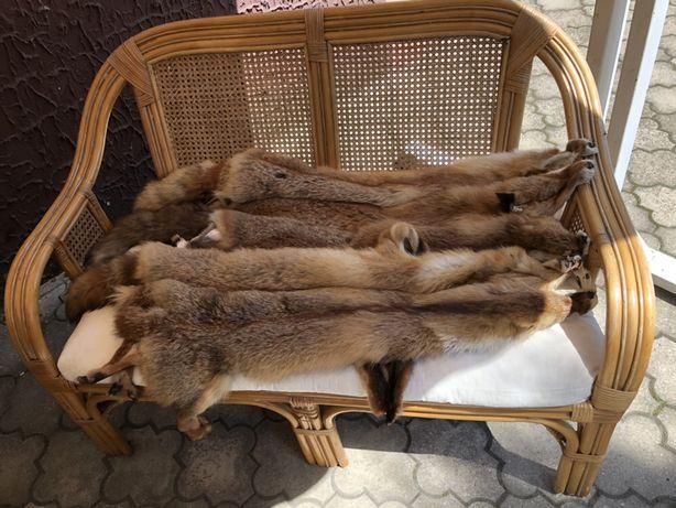 Wyprawione skóry z rudych lisów