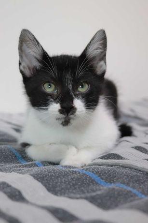URGENTE! Dou 2 gatinhos com 2 meses Aveiro
