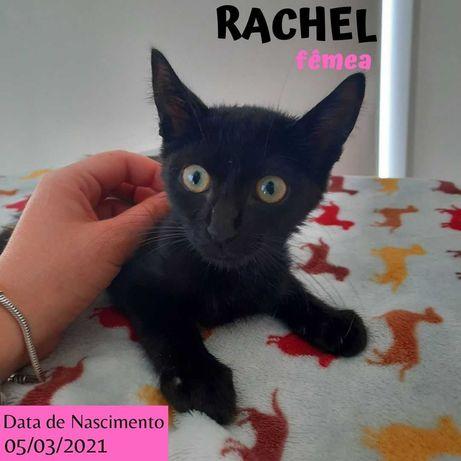 Gatinha 4 meses para adoção (Rachel)
