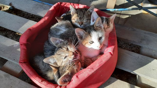 Cudne kociaki szukają domu