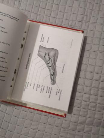 Własnoręczny słownik obrazkowy angielski - pomoc naukowa