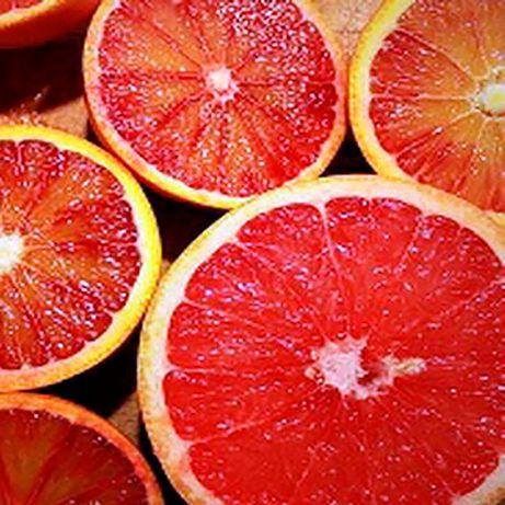 "Апельсин Пернамбуку (C. sinensis ""Sanguineum Pernambuco"") комнатный"