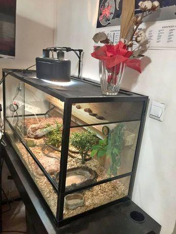 Terrarium wąż/agama/żółw 120/45/60 Super wyposarzenie