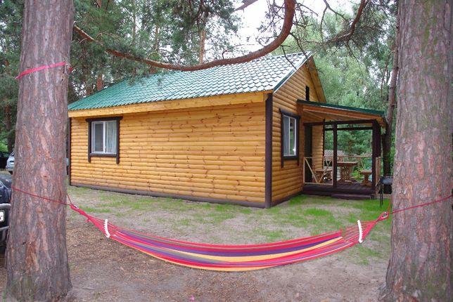 Отличный отдых недорого в сосновом лесу на речке Десна в селе Пирновo
